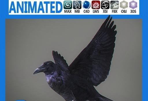 Animated-Crow.jpg