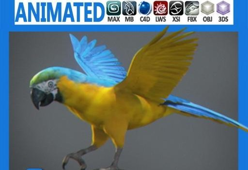 Animated-Parrot.jpg