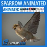 Animated-Sparrow.jpg