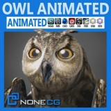 Animated-Owl.jpg